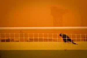 Sydney Dust Storm_2_sml