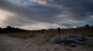 Abandoned squid yarra bay